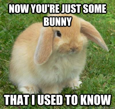 Funny-Bunny-Meme-Now-You-Are-Just-Some-Bunny-That-I-Used-To-Know-Picture